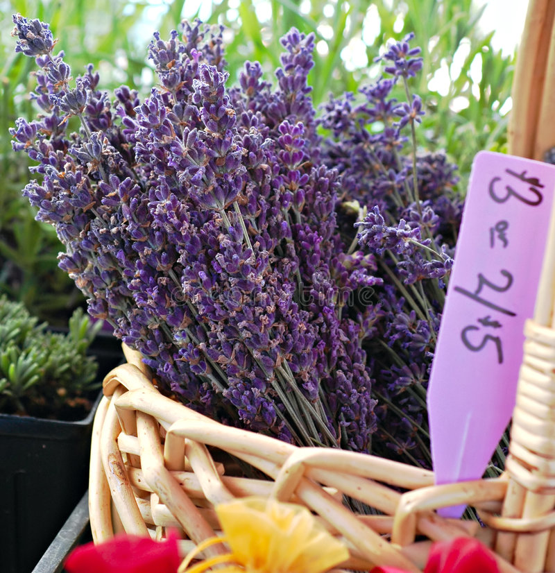 Lavender at Marketplace. Bunches of fresh lavender in a basket for sale at a farmer's market in summer royalty free stock image