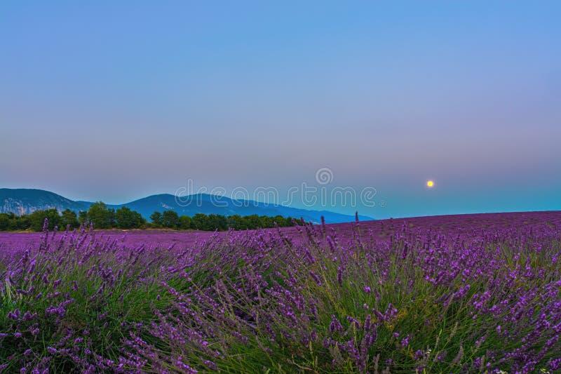 Lavender Moon II stock photography