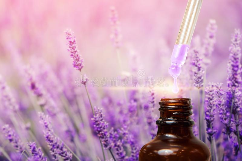 Lavender oil with dropping pipette. Background is purple. Concept beauty of nature stock photo