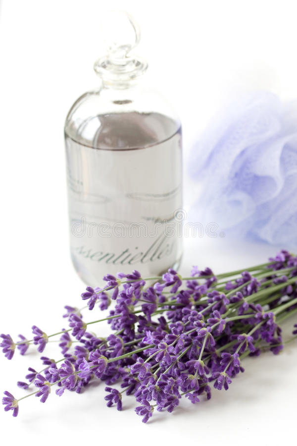 Lavender plant and oil royalty free stock photography
