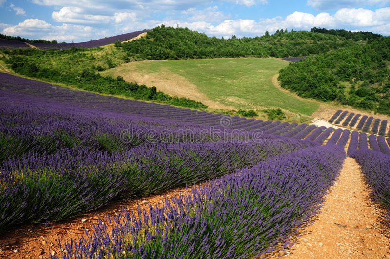 Download Lavender. The Plateau Of Valensole In Provence Royalty Free Stock Photos - Image: 34439818