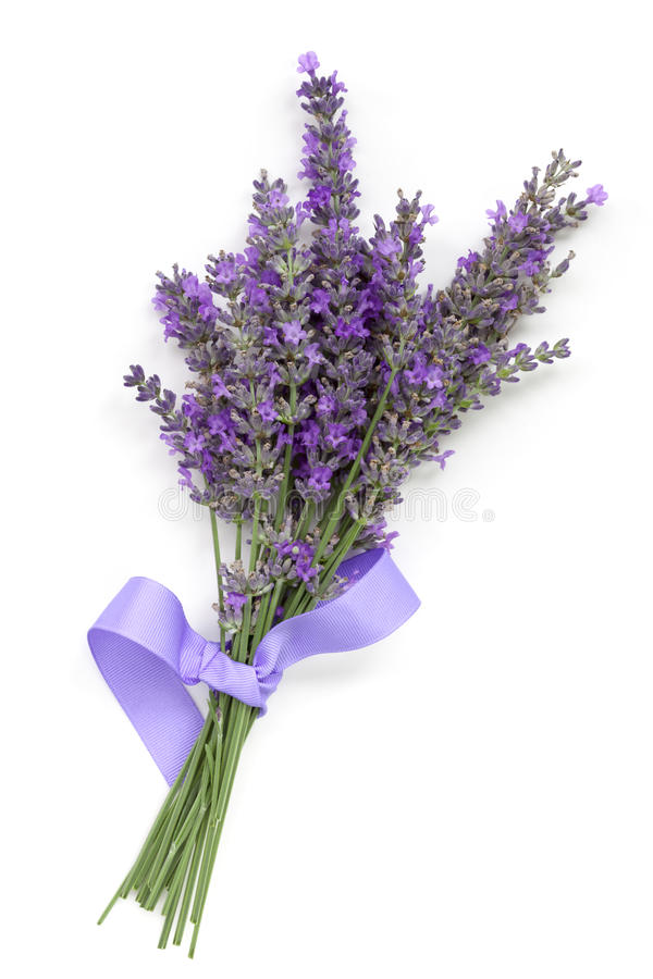 Lavender With Ribbon Over White Stock Image Image Of