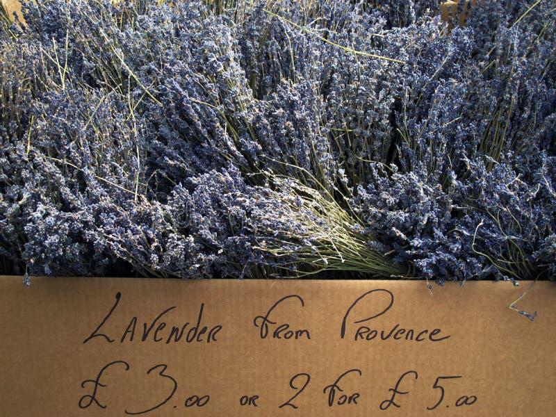 Lavender for sale stock image