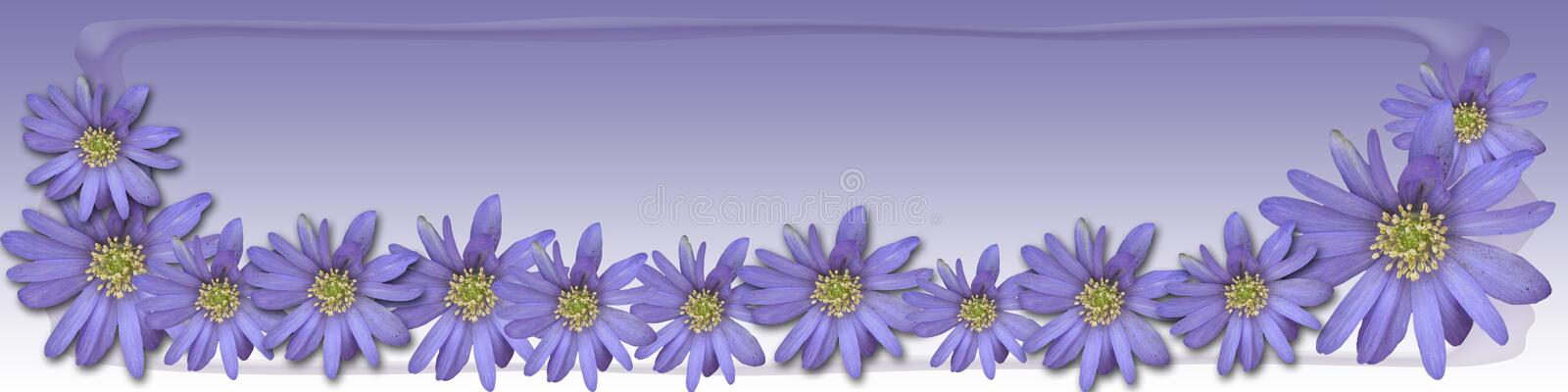 Lavender spring. Banner / header / background in lavender tones with cute little anemone / spring flowers royalty free illustration