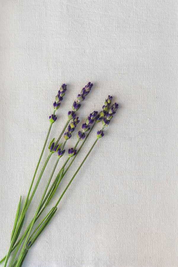 Lavender still life interior shot. Spoon stock photography