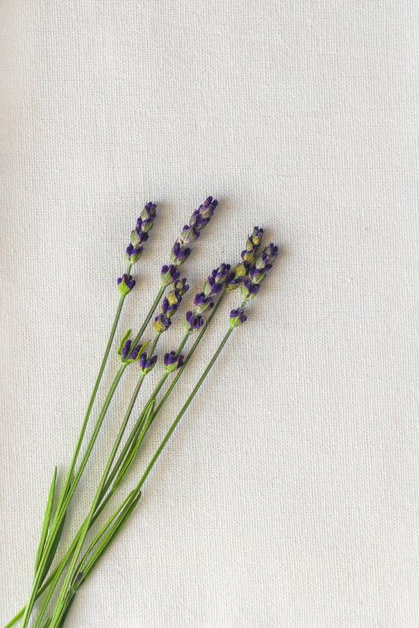 Lavender still life interior shot. Spoon stock image