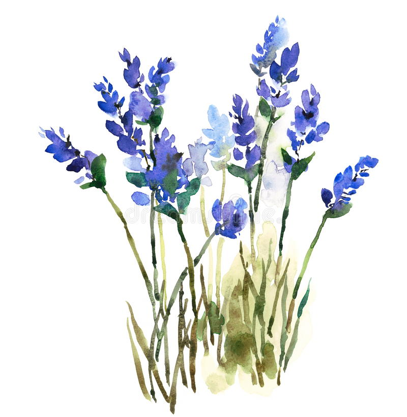 Lavender Watercolor Flowers Illustration Hand Painted royalty free illustration