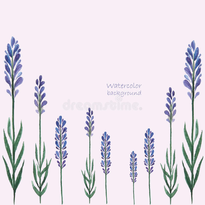 Lavender watercolor. stock illustration