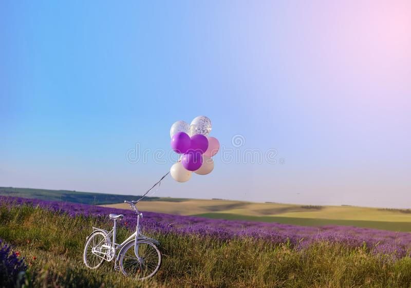 lavender with wedding white bicycle royalty free stock photos