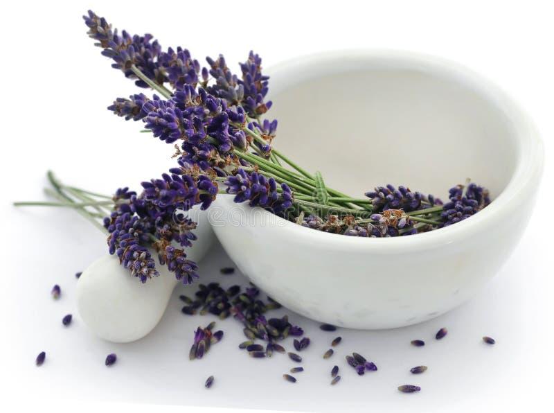 Lavenderbloem in een mortier met stamper royalty-vrije stock afbeeldingen
