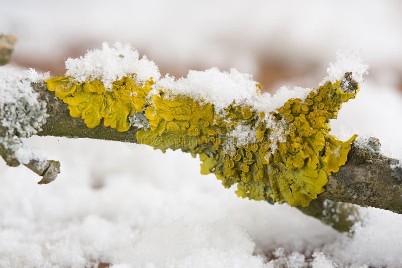 Laver på träd fotografering för bildbyråer