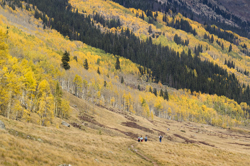 Lavin av guld- Aspen Trees Surround Hikers i Vail Colorado royaltyfria foton