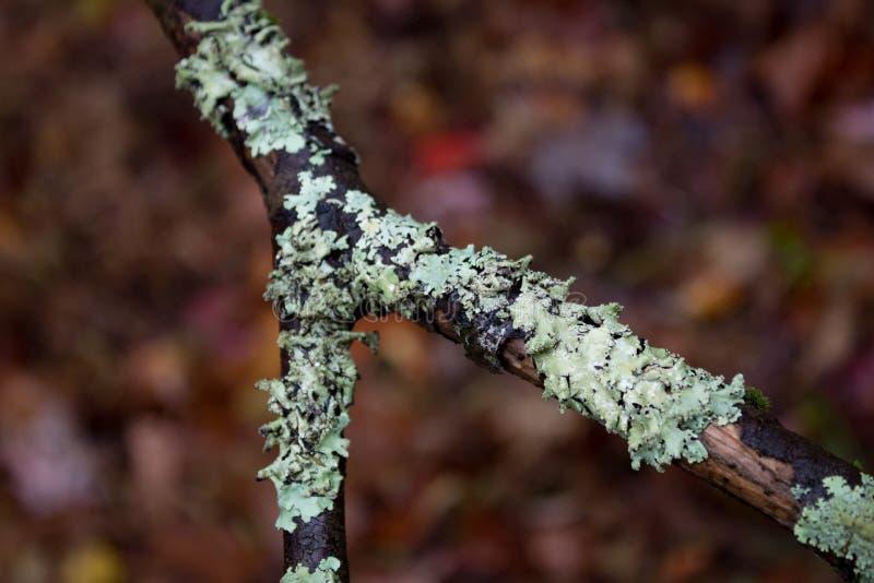 Lavmossa på ett delat fattar för våta sidor, selektiv fokus royaltyfri bild