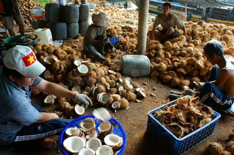 Lavoratore asiatico, noce di cocco, copra, materiale, delta del Mekong fotografia stock libera da diritti