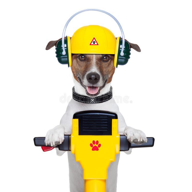 Lavoratore del cane del tuttofare fotografie stock libere da diritti
