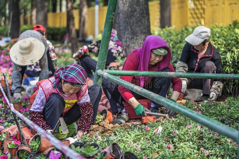 Lavoratore del giardino sul lavoro immagine stock