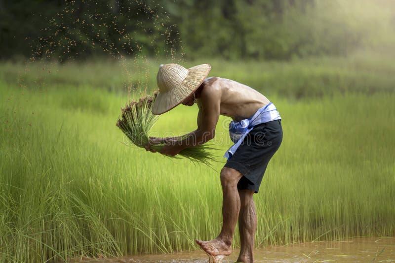 Lavoratore dell'agricoltore dell'uomo fotografia stock libera da diritti
