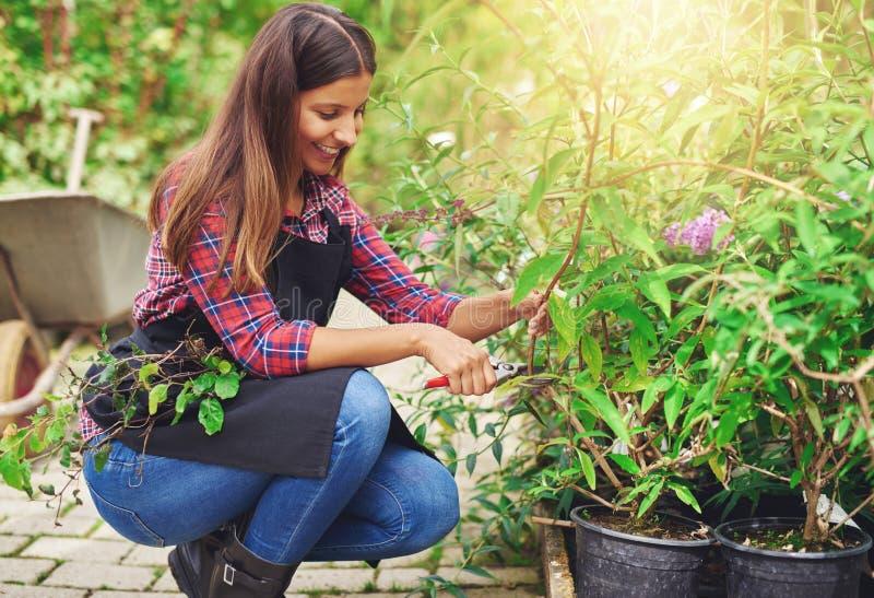 Lavoratore della scuola materna che pota una pianta in vaso immagine stock