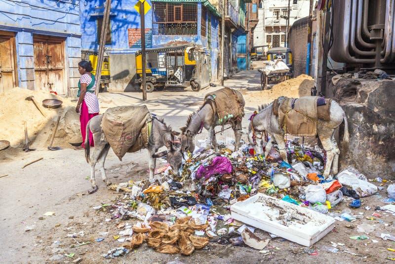 Lavoratore ed asini indiani del feamle fotografia stock