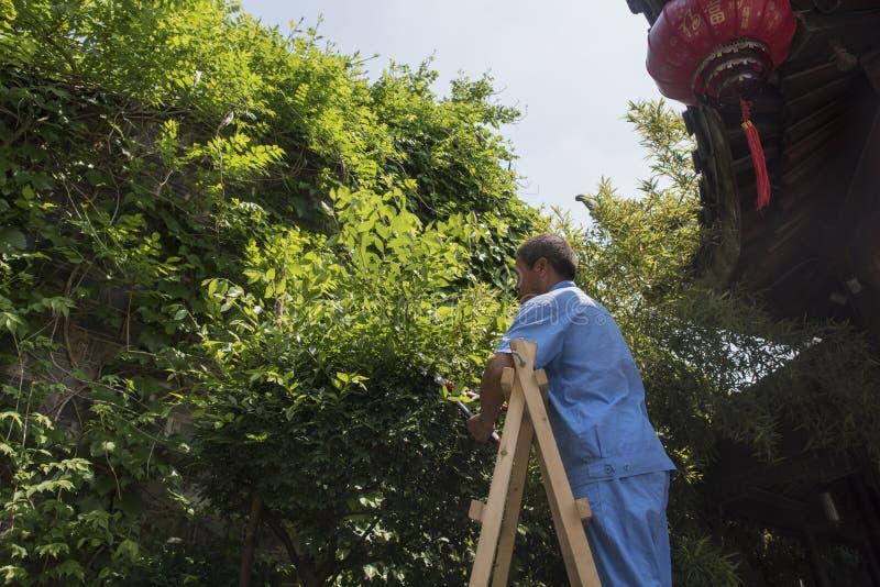 Lavoratore maschio del giardino che sta sulle piante di legno della guarnizione della scala fotografia stock