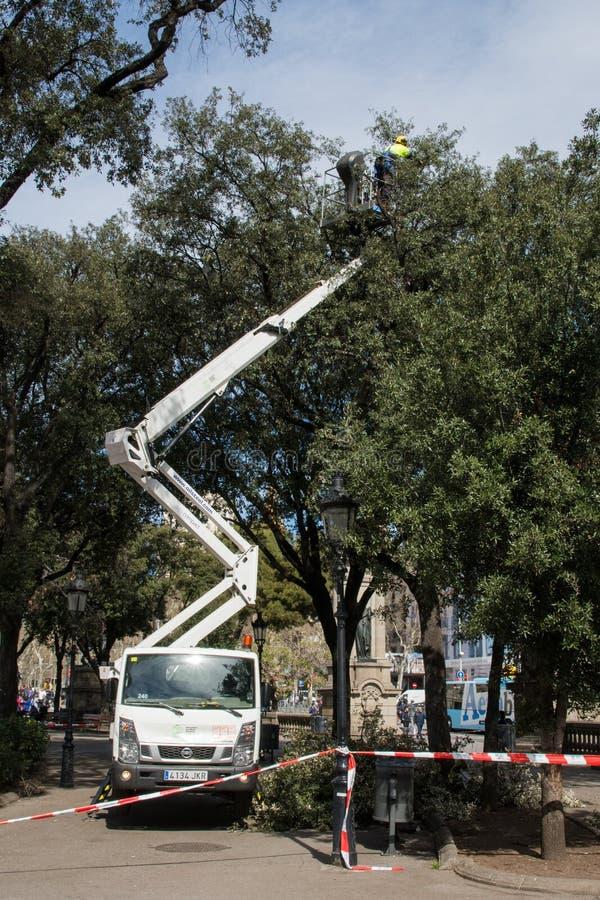 Lavoratore non identificato sull'automobile della taglierina dell'albero a Barcellona, Spagna fotografie stock libere da diritti