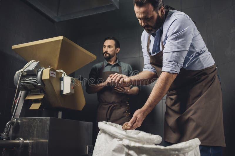 Lavoratori della fabbrica di birra che ispezionano i grani immagini stock libere da diritti