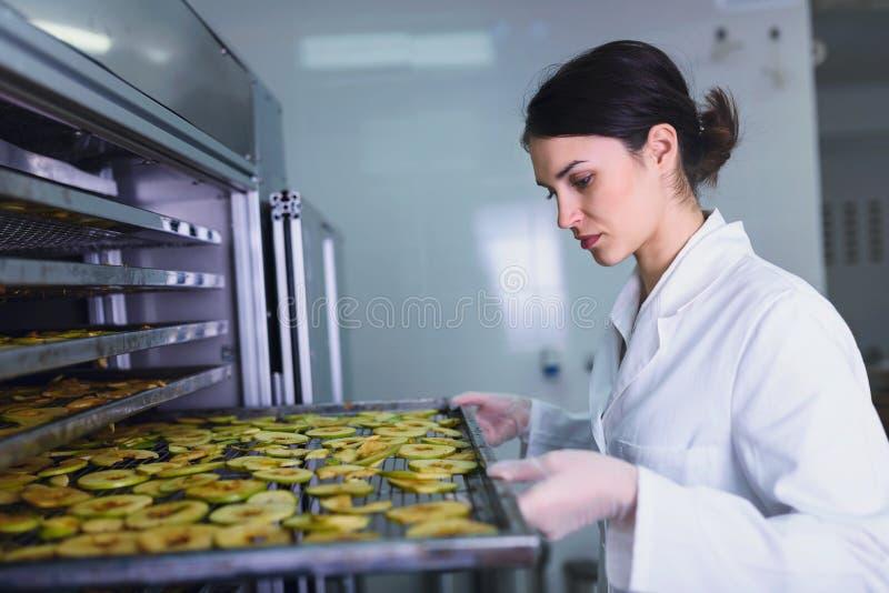 Lavoratrice sulla macchina del disidratatore dell'essiccatore dell'alimento immagine stock libera da diritti