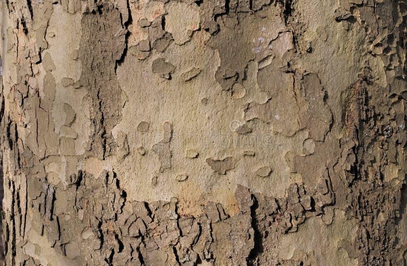 Lavorazione del legno delle nature immagini stock libere da diritti