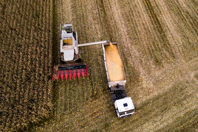 Lavoro agricolo di autunno L'associazione raccoglie il cereale dal campo immagine stock libera da diritti