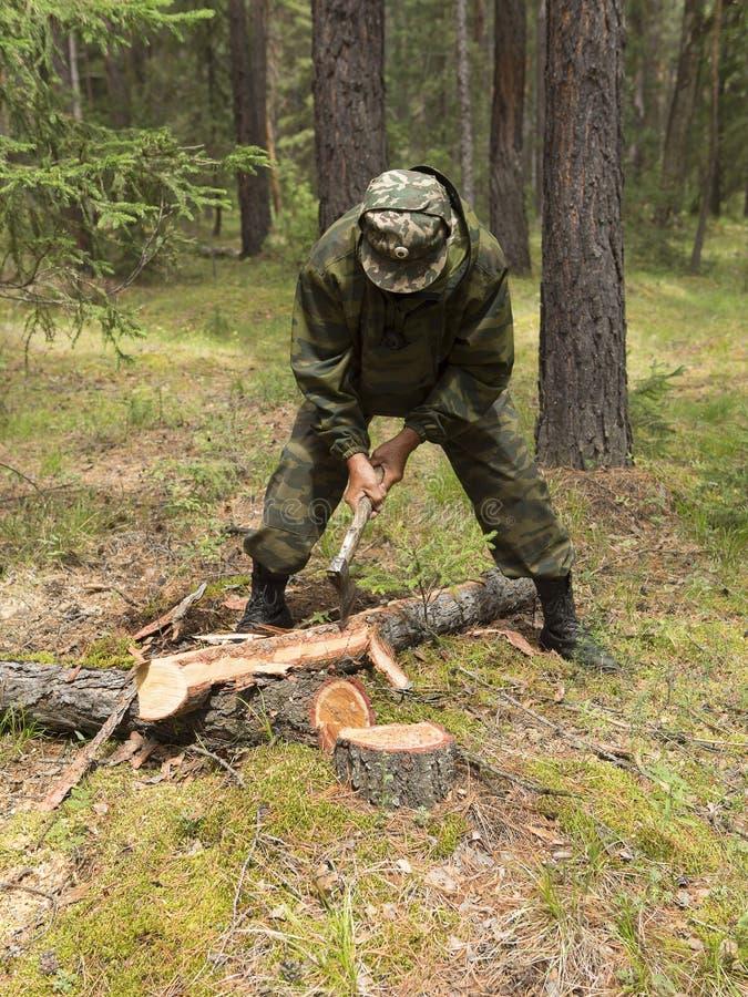 Lavoro degli ispettori della foresta nella foresta fotografia stock libera da diritti