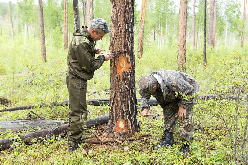 Lavoro degli ispettori della foresta nella foresta immagine stock