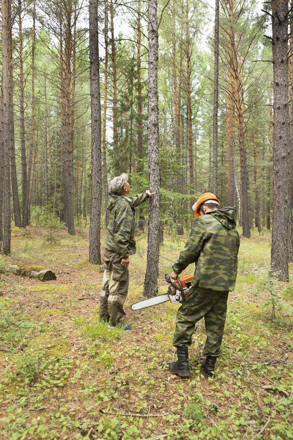 Lavoro degli ispettori della foresta nella foresta fotografie stock libere da diritti
