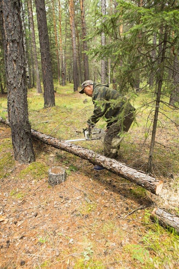 Lavoro degli ispettori della foresta nella foresta immagini stock