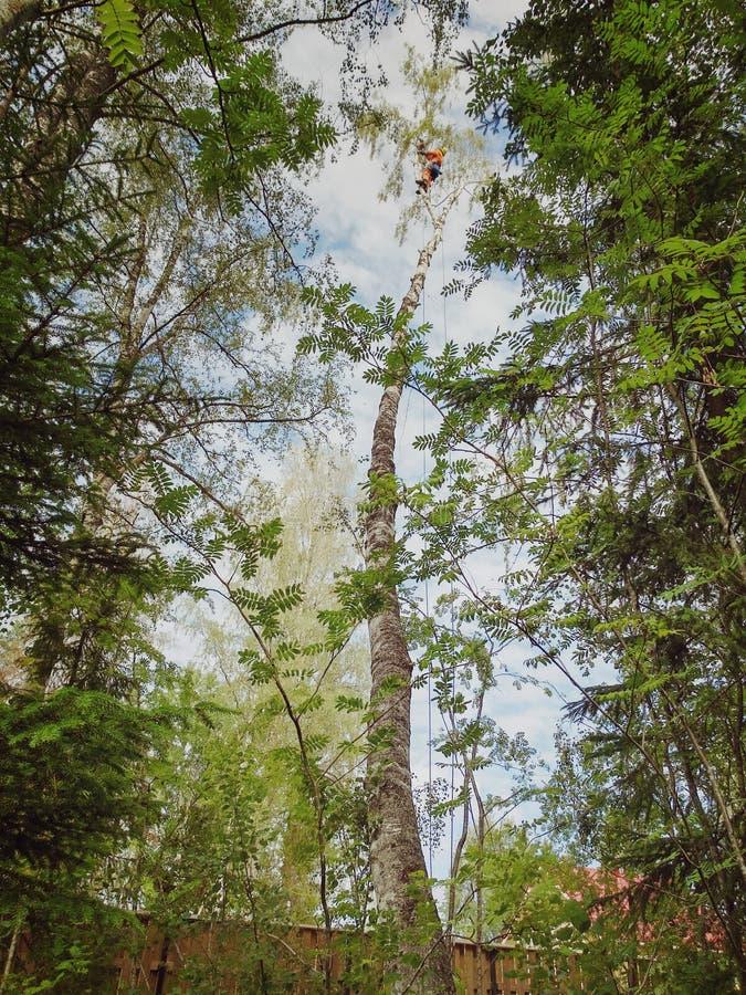 Lavoro dell'arboricoltore immagini stock libere da diritti