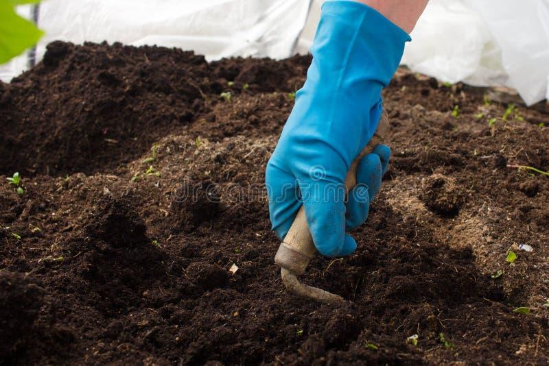 Lavoro nel giardino in primavera che pianta le piante fotografia stock libera da diritti