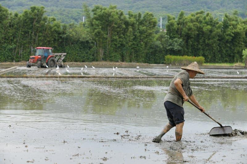 Lavoro nelle risaie
