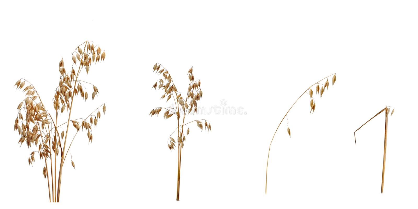 Law of diminishing returns. Shown with crops yielding less and less royalty free stock images