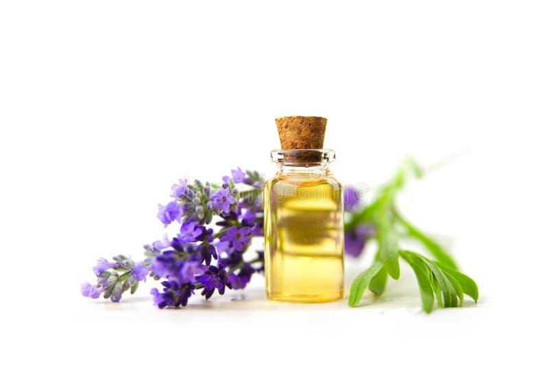 Lawenda istotny olej w pięknej butelce na Białym tle obraz stock