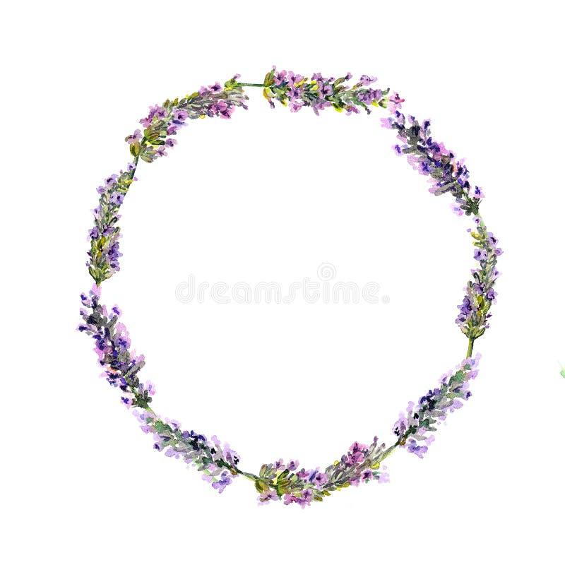 Lawenda kwitnie wianek akwarela ilustracji