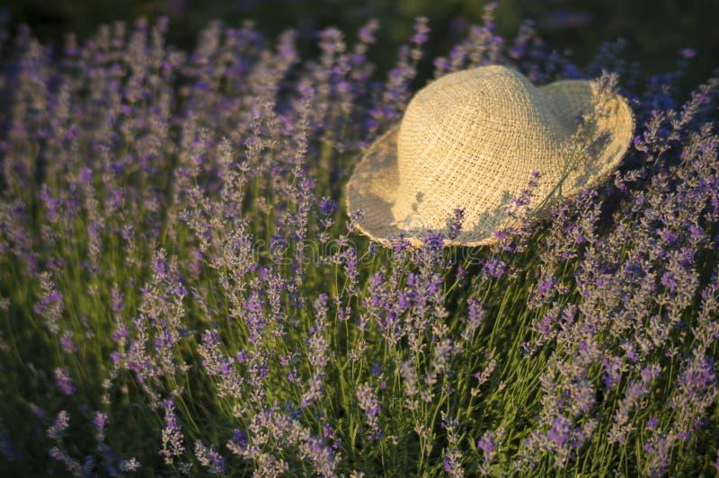 Lawenda w kapeluszu zdjęcia royalty free