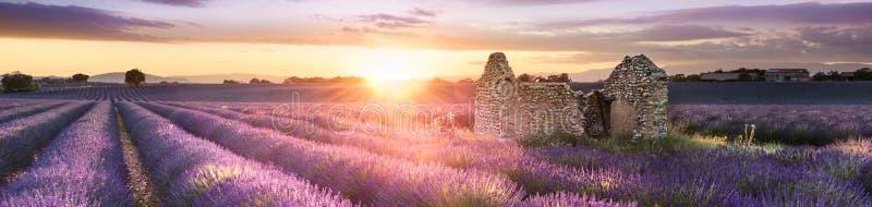 Lawenda w południe Francja fotografia stock