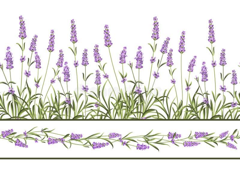 Lawendowa Bezszwowa ramowa linia ilustracja wektor