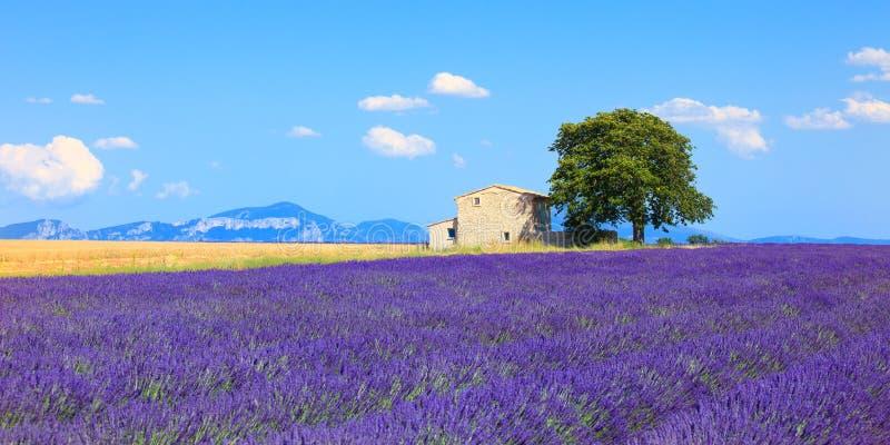 Lawendowi kwiaty kwitnie pole, dom i drzewa. Provence, frank fotografia royalty free