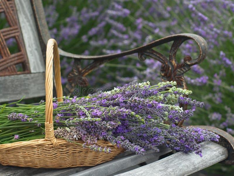 Lawendowi kwiaty Wypełniają Koszykowego obsiadanie na ławce fotografia stock
