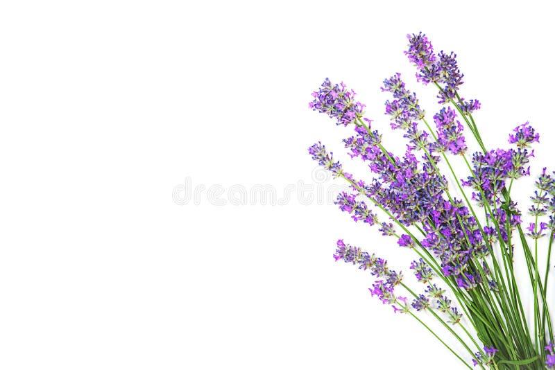 Lawendowy kwiatu wzór odizolowywający na białym tle obraz stock