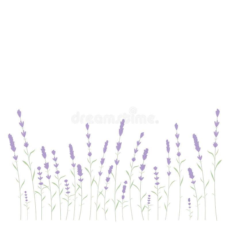 Lawendy karty granicy wektor Rocznik etykietka z lawendową wonią Szczegółowy botaniczny sztandar organicznie kosmetyk ilustracji