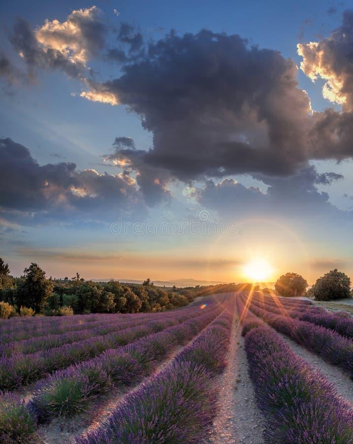 Lawendy pole przeciw kolorowemu zmierzchowi w Provence, Francja zdjęcie stock