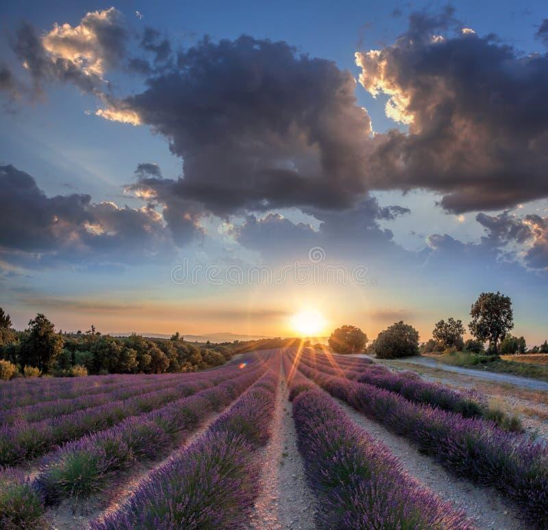 Lawendy pole przeciw kolorowemu zmierzchowi w Provence, Francja fotografia royalty free