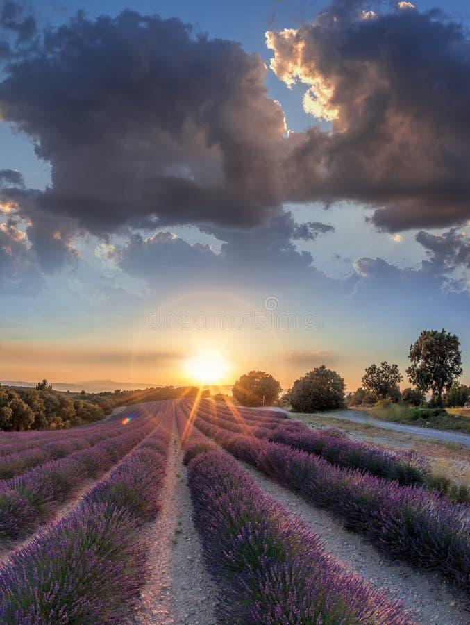 Lawendy pole przeciw kolorowemu zmierzchowi w Provence, Francja zdjęcia stock