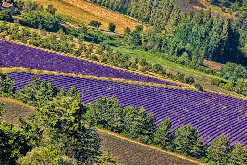 Lawendy pole w Provence, blisko Sault miasteczka w Francja zdjęcie stock